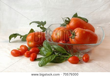 Datterini and Cirano tomatoes