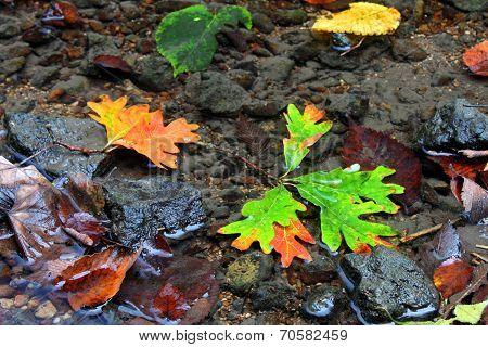 Autumn Creek Background