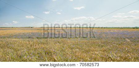 Harvest Panorama