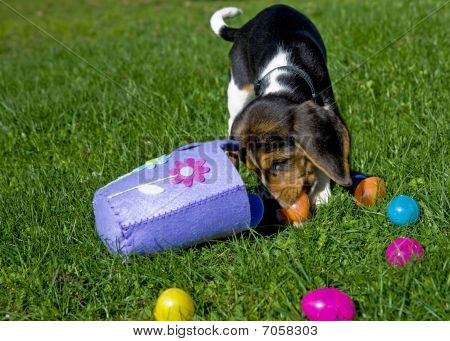 Cute Beagle Puppy With Easter Basket