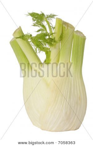 Bulb Of Fennel
