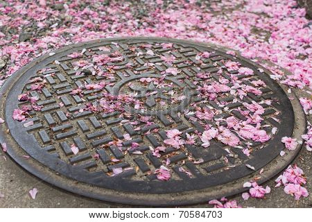 Falling cherry blossom petals on the sewer lid in Kyoto.