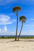stock photo of gulf mexico  - Two palms overlook the Gulf of Mexico with azure skies and white clouds  - JPG