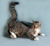 pic of yellow tabby  - Tabby cat with yellow eyes lying on gray background - JPG