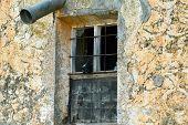 pic of por  - perro vigilando por una vieja ventana rota - JPG