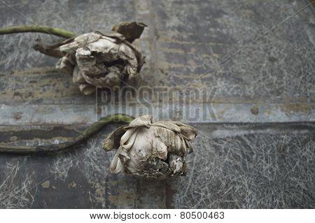 Dried White Lotus