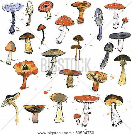 Set of watercolor drawing mushrooms