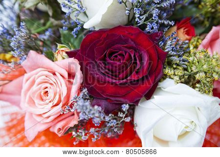 Rosebuds Closeup