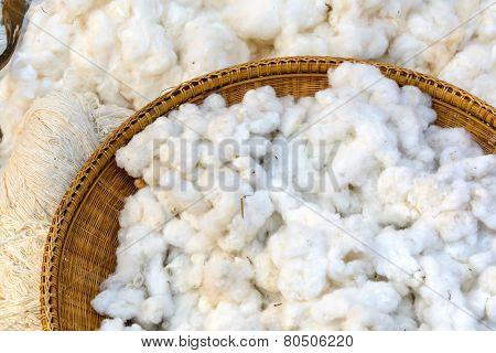 Cotton Prepare For Make Cotton Thread