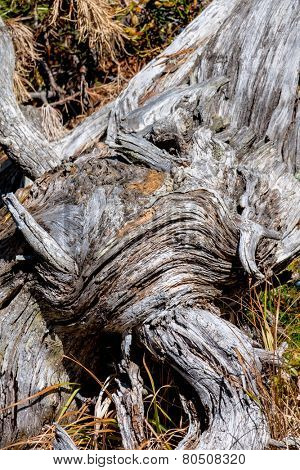 bark of an old tree, symbol of age, networking, growth, strength