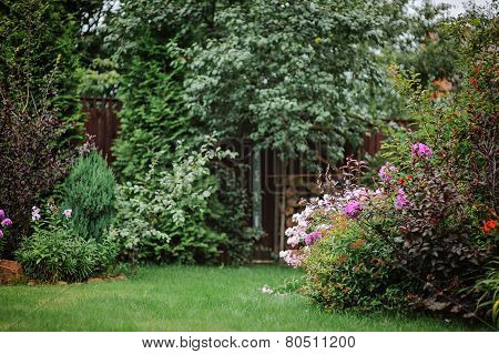 summer garden view with colorful bush and wooden fence