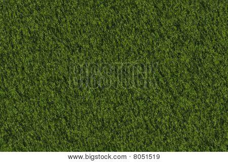 Texture Moss