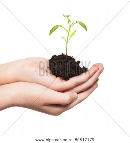 Sprout in children's hands. Seedling isolated on white