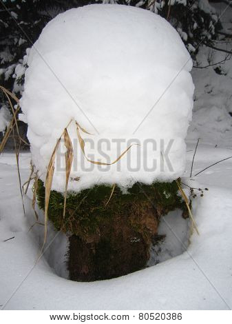 Snow-coverd stump