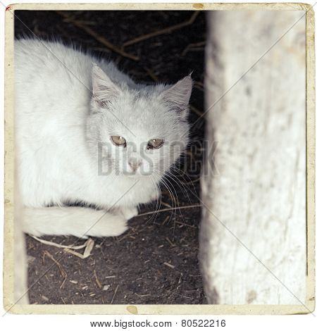 White cat sitting under the table