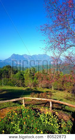 doi luang chiang dao mountain at chiangmai thailand