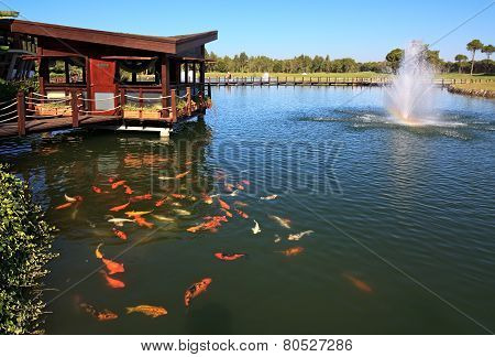 Artificial pond with fountain and fish.