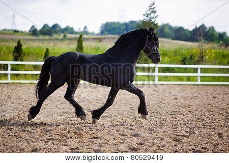 Running Frisian Horse