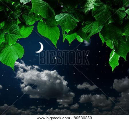 forest trees leaf. nature green wood on the hight sky backgrounds.