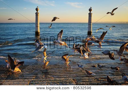 Lisbon landmark Columns Dock with many seagulls at sunset