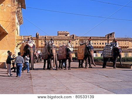 Indian elephants at the Amber Fort.