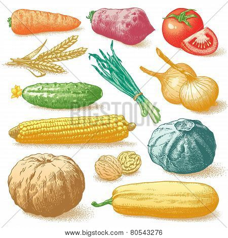 Vegetables, Fruits And Plants Colour Vector