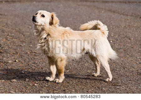 Cute homeless stray dog