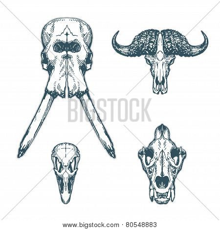 Animal Scull Set Elephant Buffalo Ostrich Lion