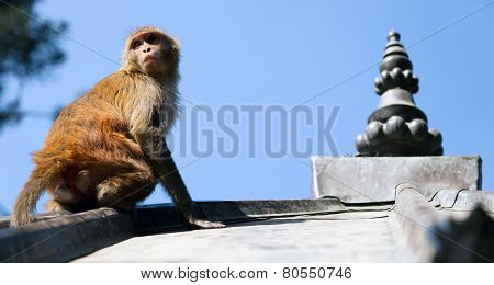 Swayambhunath Monkey Temple. Kathmandu, Nepal