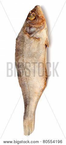 Dried Roach Isolated On White Background