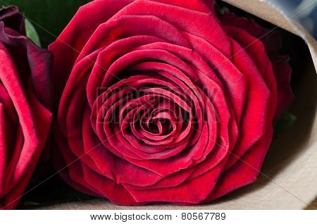 Rose Bouquet Macro