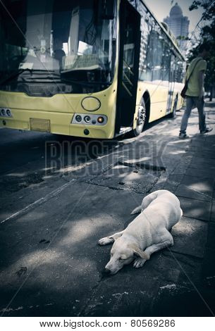 Dog sleeping on the sidewalk. LOMO effect