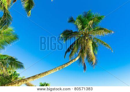 Getaway Paradise View