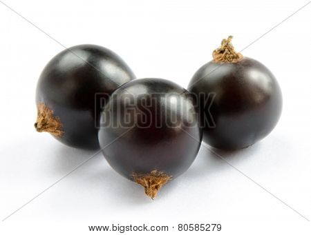 Ripe Black Currants Isolated on the White Background