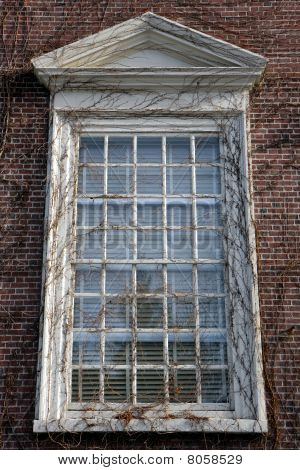 Harvard Campus Window