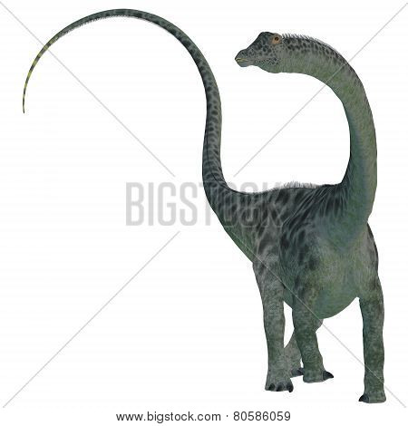 Diplodocus Dinosaur On White