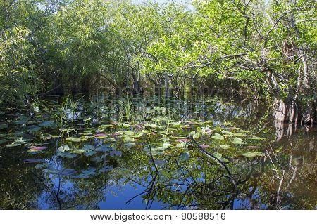 Everglades Swamp Park In Florida