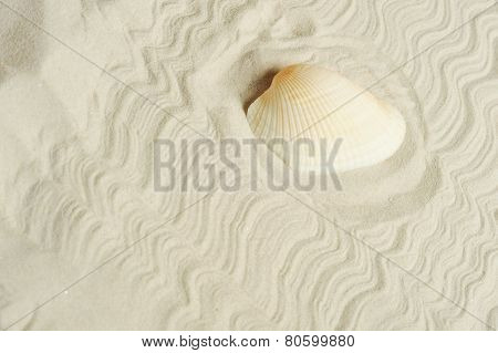 Cockleshell On Sand