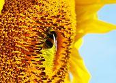 stock photo of fragrance  - nature flowers fragrance summer sun sunny days  - JPG