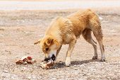 stock photo of stray dog  - Close up dirty stray dog try to hold the bone in mouth - JPG