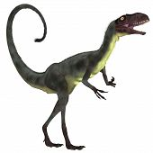 pic of carnivores  - Dilong was a small carnivorous theropod dinosaur the lived in the Lower Cretaceous Era in China - JPG