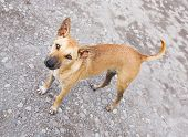 stock photo of stray dog  - Close up dirty stray dog standing on bumpy road and looking up to camera - JPG
