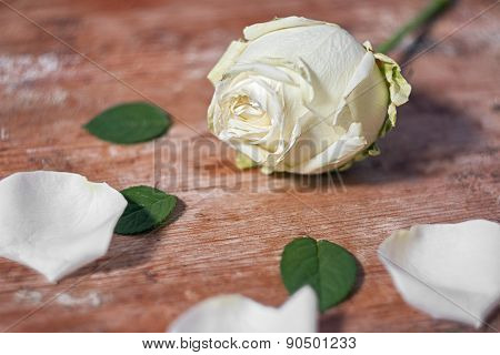 White Rose On A Wooden Base