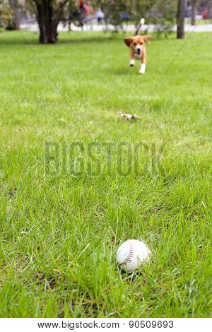 Small ball for baseball on grass in park