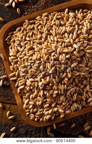 Raw Organic Spelt Grain