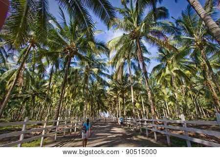 Beautiful landscape of palm tree path in Cojimies beach, Ecuador