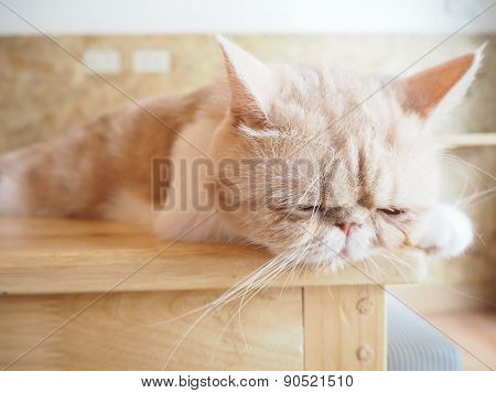 Cat Sitting On The Table
