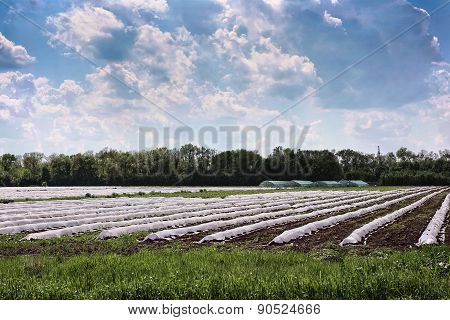 Greenhouse On The Field With Early Vegetables