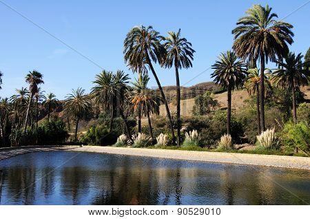 Lake and palm trees, Malaga.