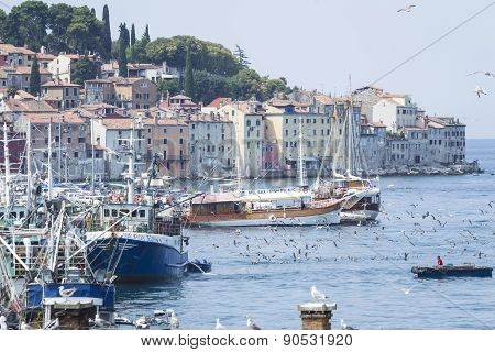Old Town And Harbour In Rovinj